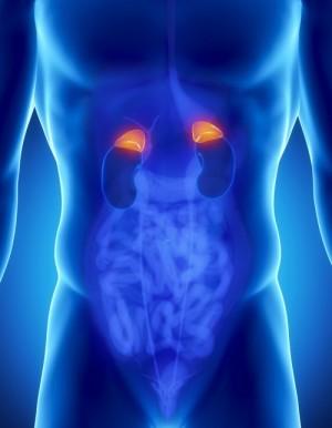 adrenal-glands-tulsa-adrenal-fatigue